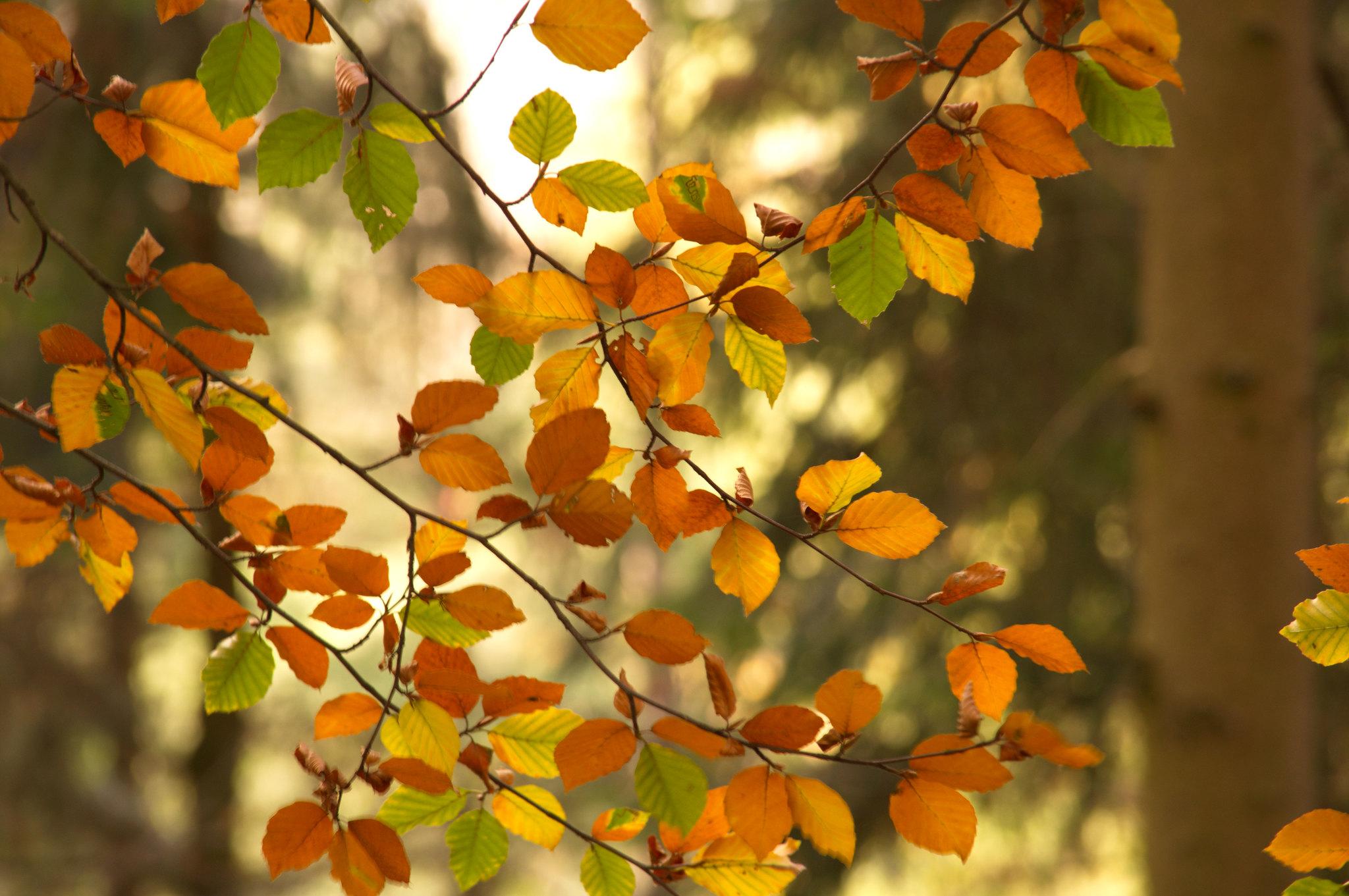 131548 скачать обои Природа, Ветки, Осень, Листья, Дерево - заставки и картинки бесплатно