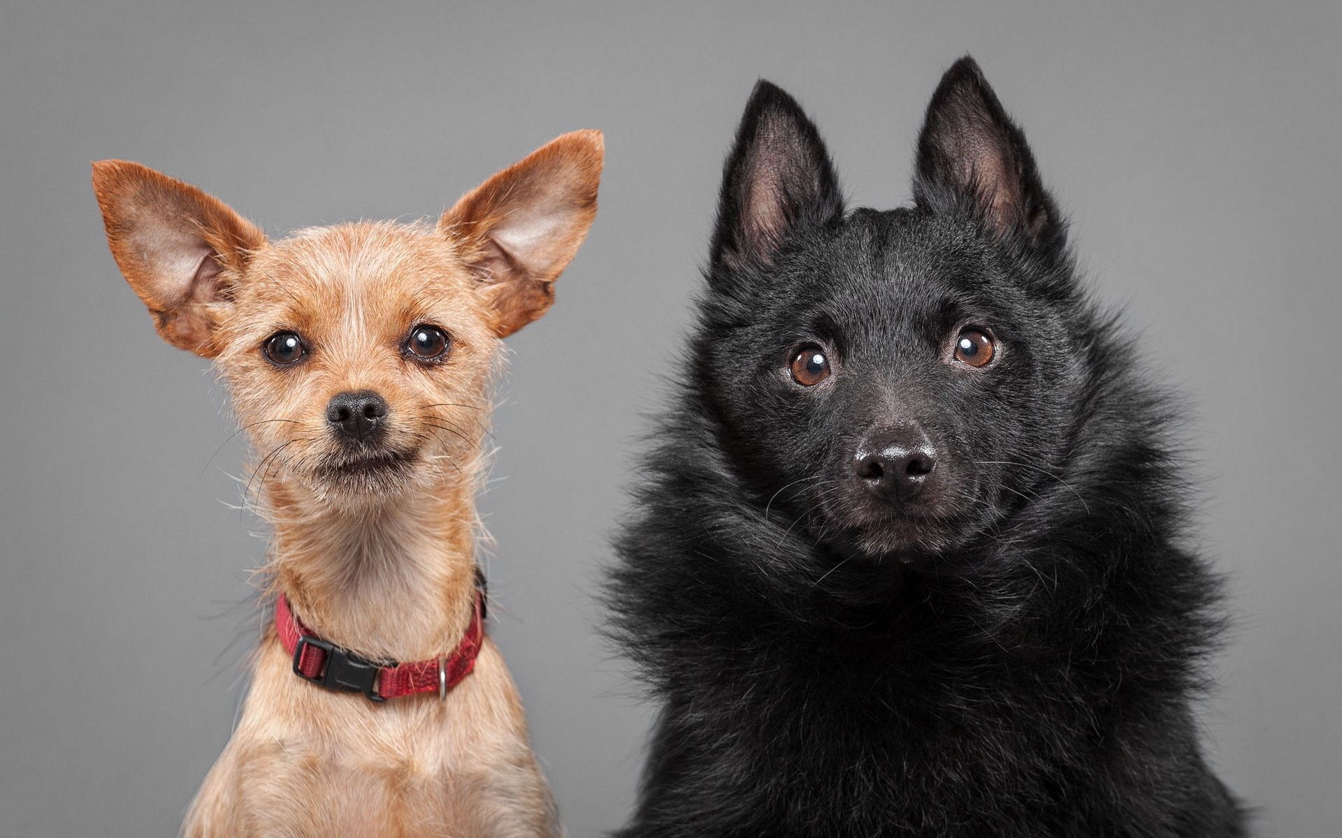 114153 Screensavers and Wallpapers Emotions for phone. Download Animals, Dogs, Couple, Pair, Emotions, Puppies pictures for free