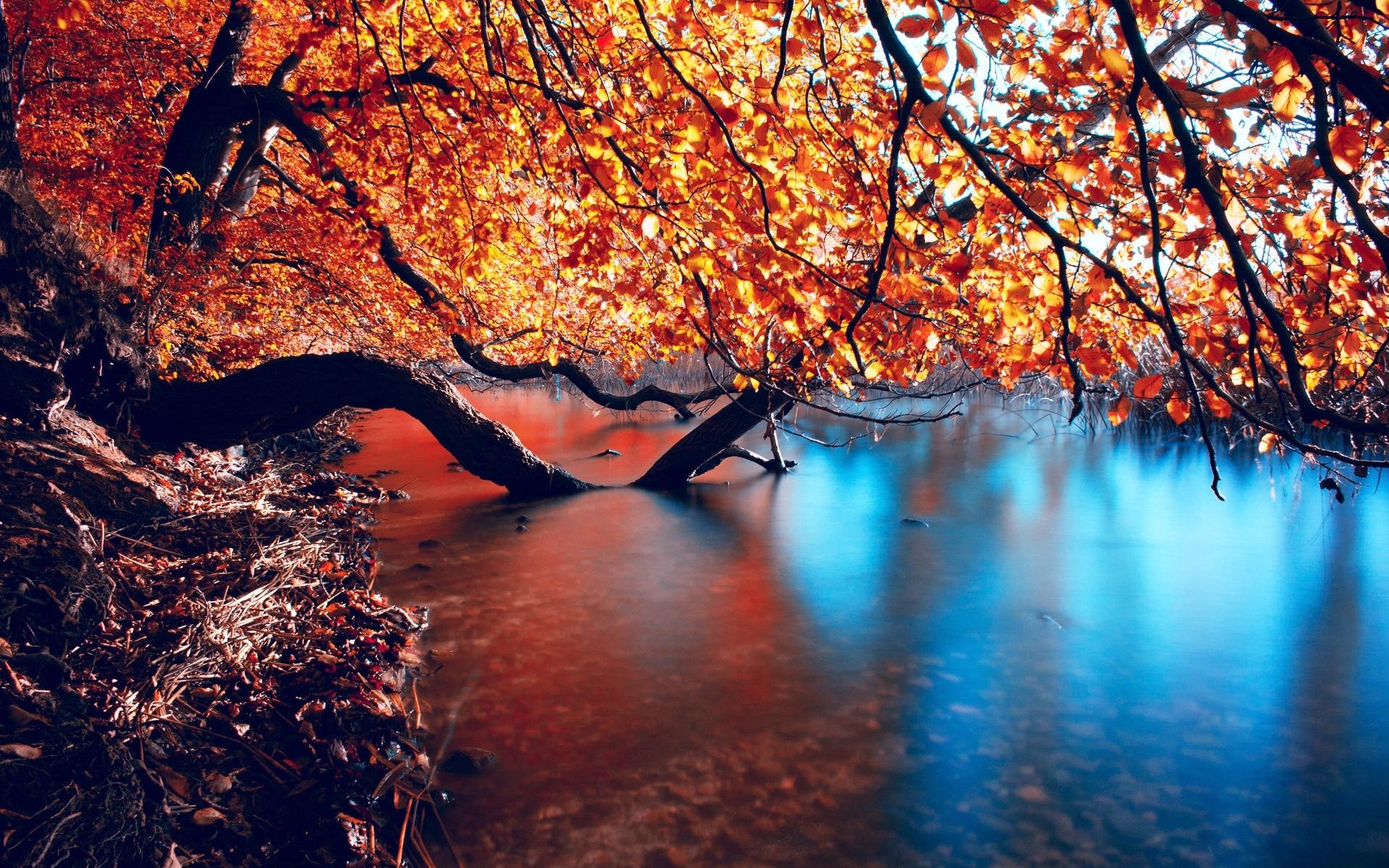 30936 скачать обои Пейзаж, Река, Деревья, Осень - заставки и картинки бесплатно