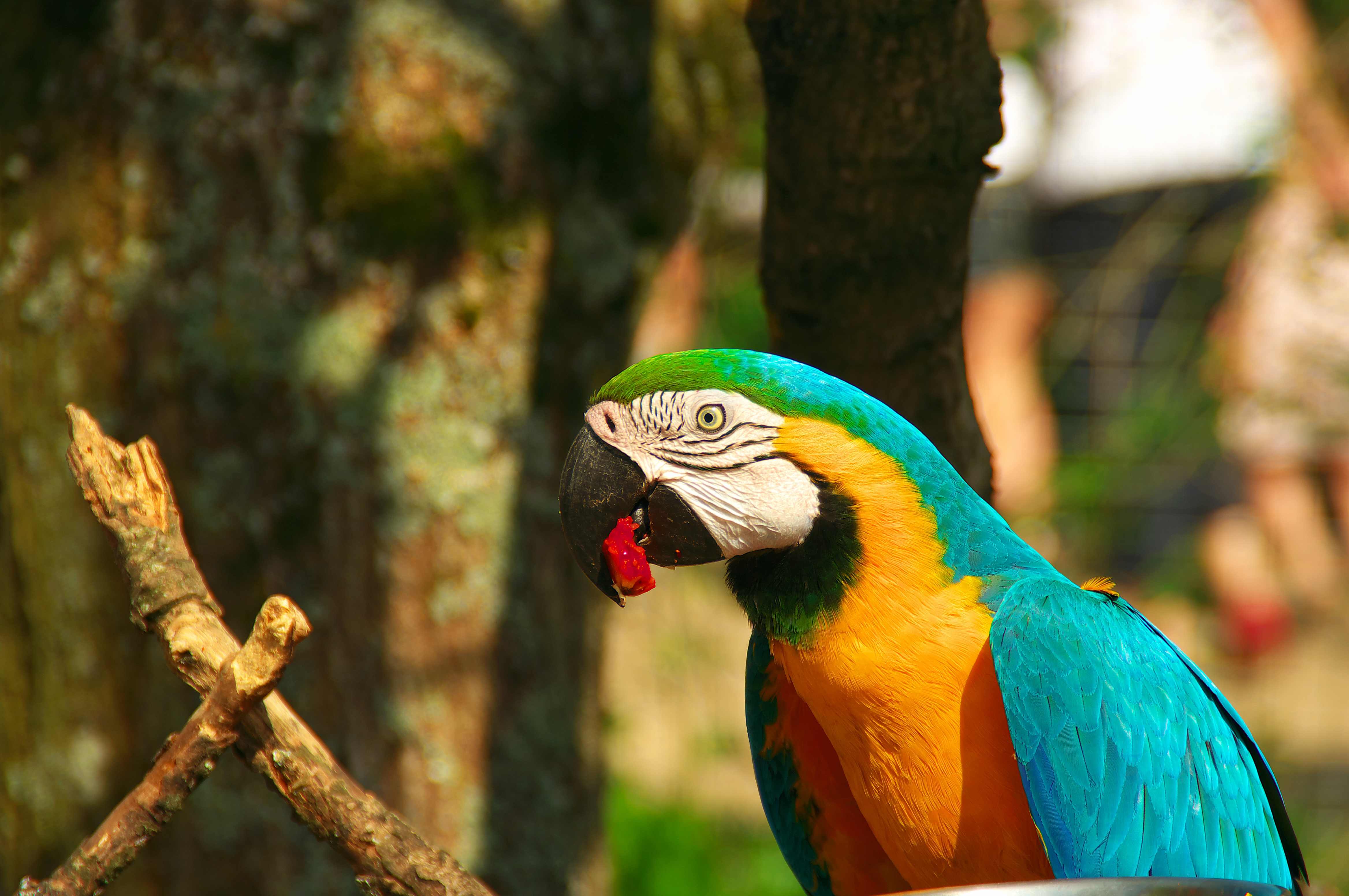 112160 download wallpaper Animals, Parrots, Macaw, Bird, Beak screensavers and pictures for free
