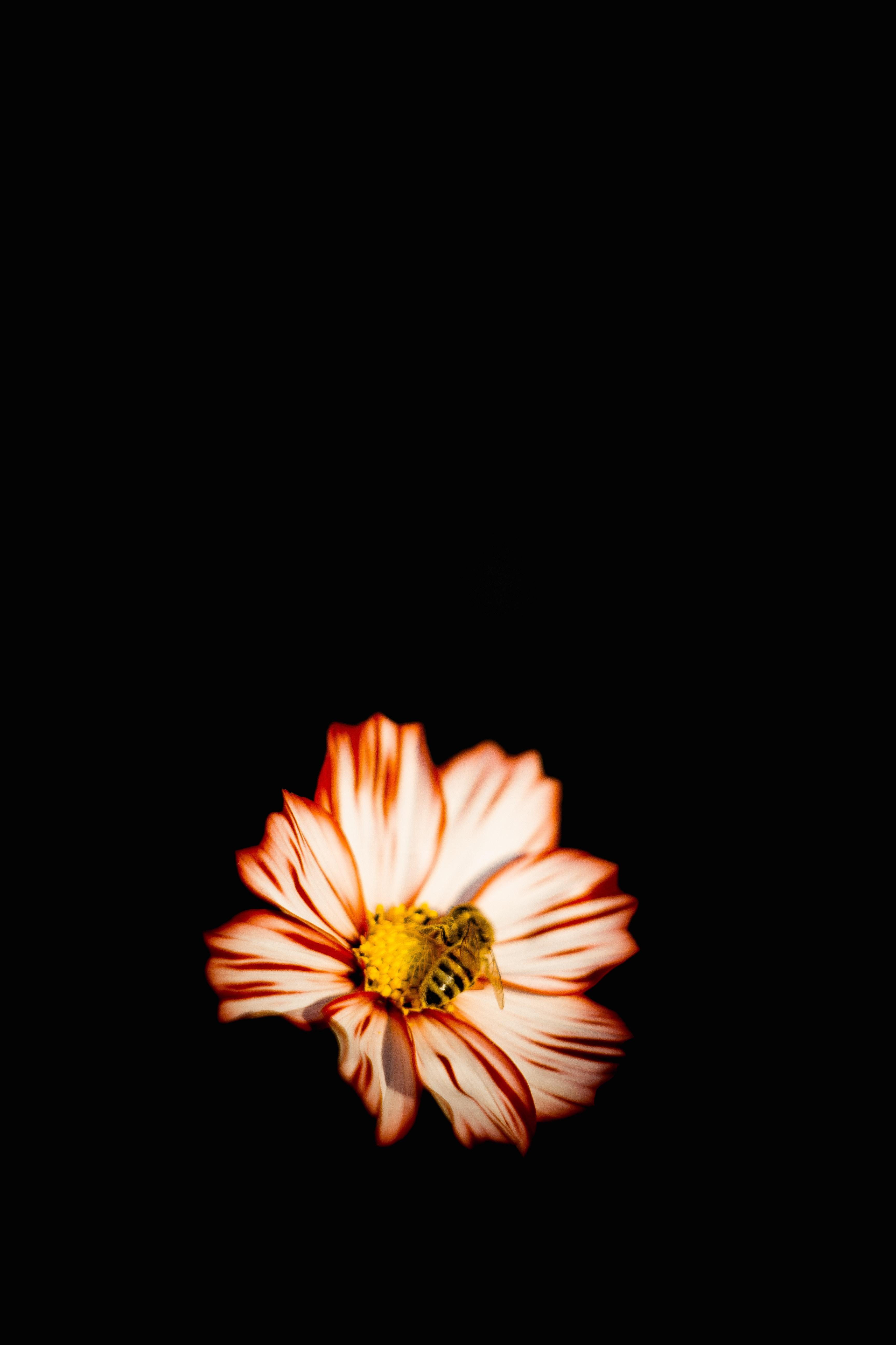 手機的73212屏保和壁紙昆虫。 免費下載 宏, 花, 花卉, 蜜蜂, 昆虫, 授粉 圖片