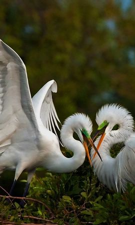 155934 download wallpaper Animals, Heron, Couple, Pair, Birds, Games screensavers and pictures for free