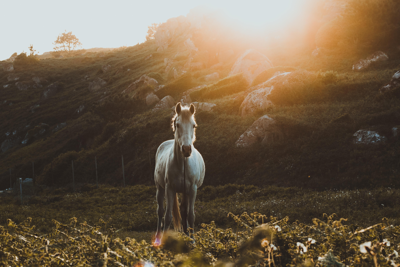 Лучшие заставки и фоны Лошадь на мобильный