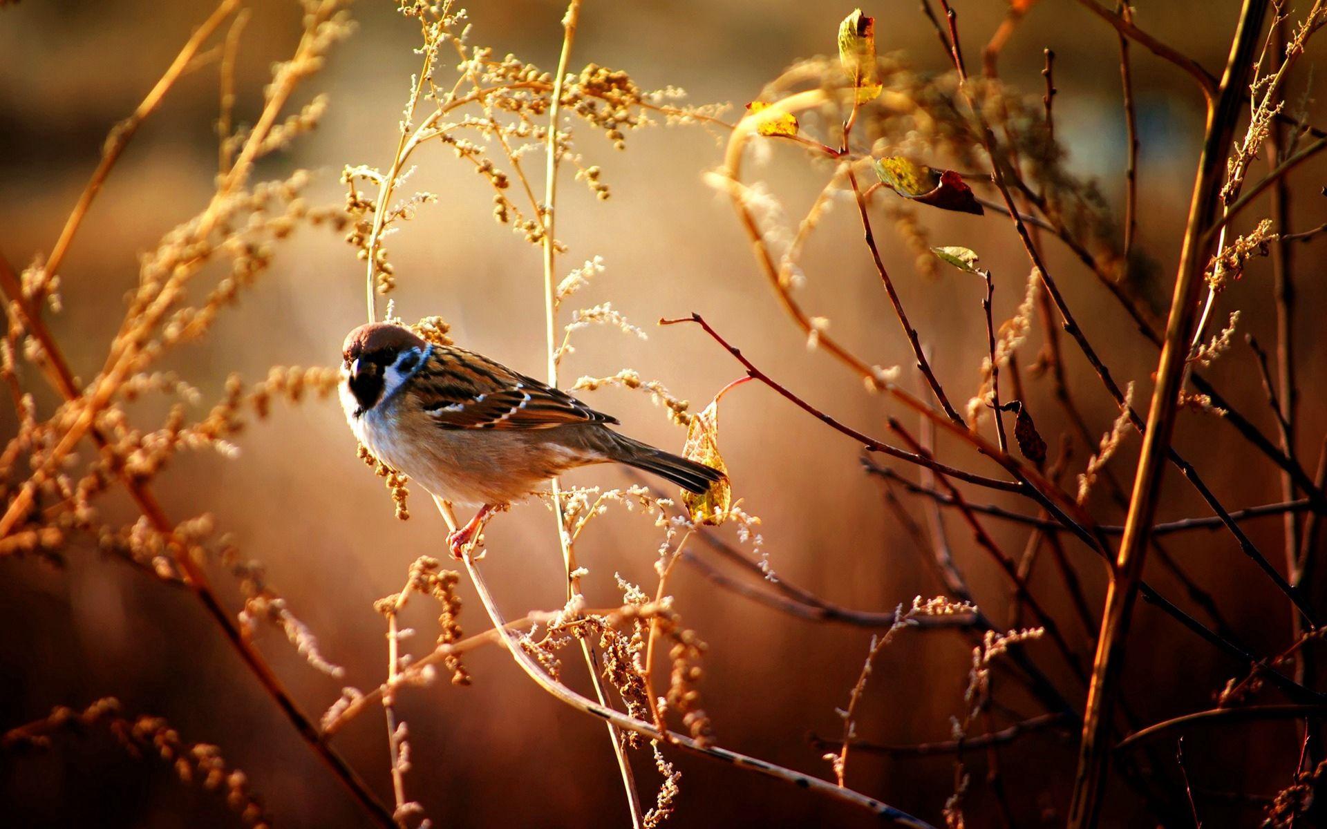 121095 descargar fondo de pantalla Animales, Gorrión, Pájaro, Sucursales, Ramas, Madera, Árbol, Flores: protectores de pantalla e imágenes gratis