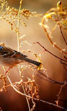121095 download wallpaper Animals, Sparrow, Bird, Branches, Wood, Tree, Flowers screensavers and pictures for free