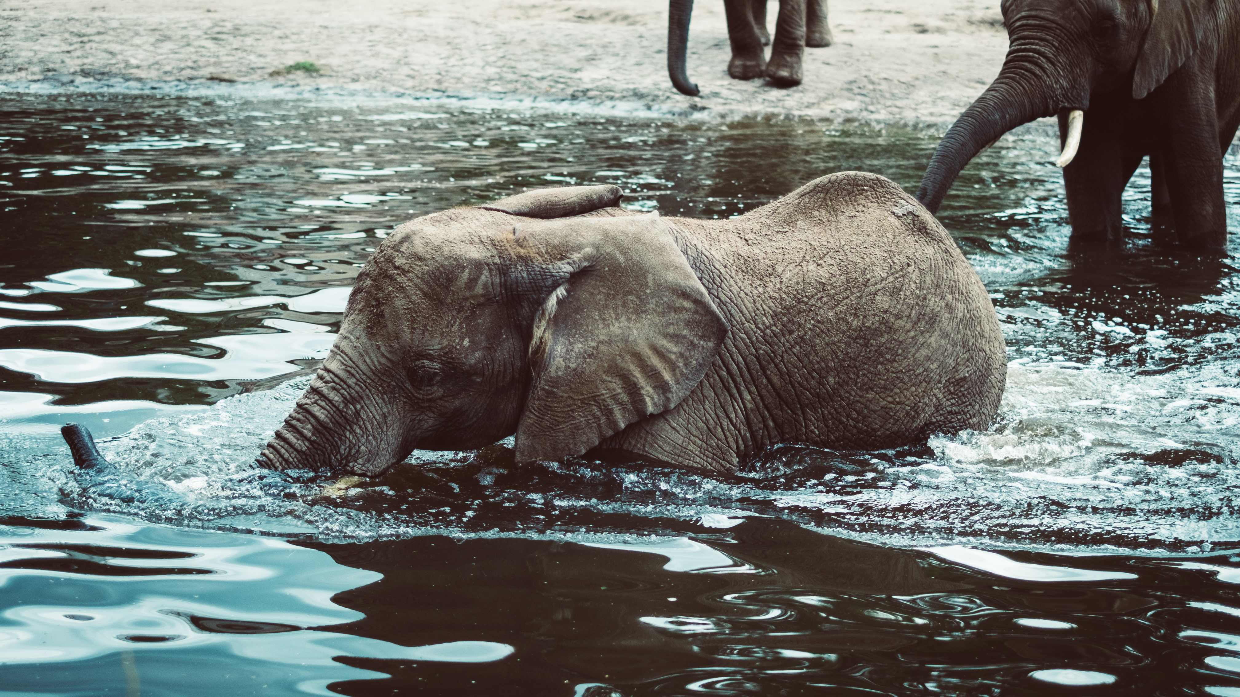 104034 download wallpaper Animals, Elephant, Young, Joey, Water screensavers and pictures for free