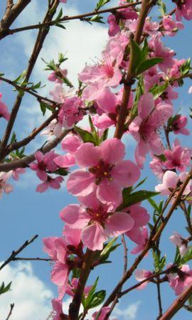 41231 télécharger le fond d'écran Plantes, Fleurs - économiseurs d'écran et images gratuitement