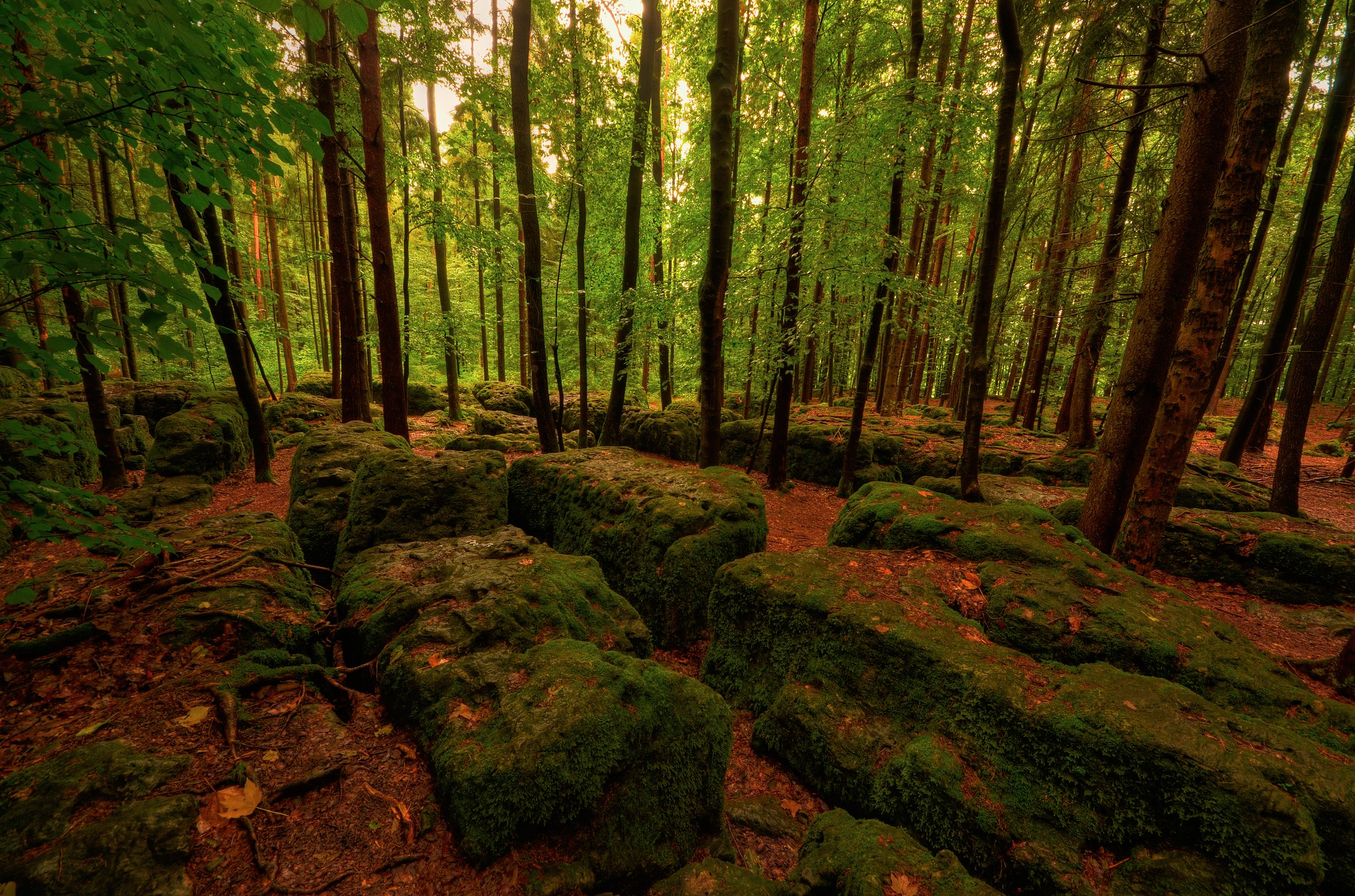69289 download wallpaper Nature, Trees, Stones, Forest, Moss screensavers and pictures for free