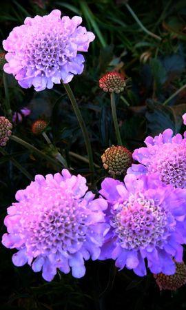 111712 скачать Фиолетовые обои на телефон бесплатно, Цветы, Ночь, Клумба Фиолетовые картинки и заставки на мобильный