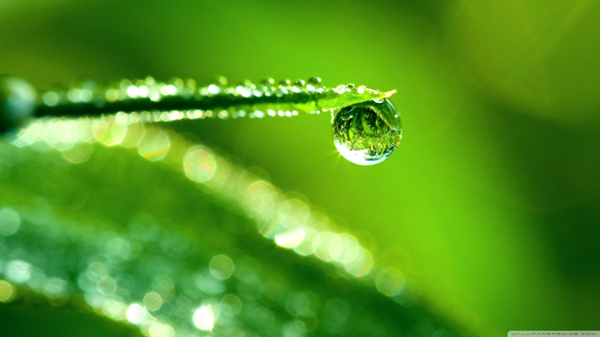 27986 download wallpaper Grass, Background, Drops screensavers and pictures for free