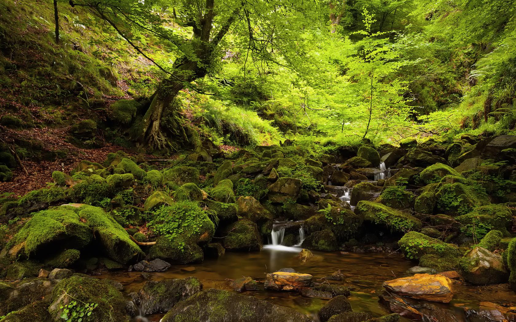 22782 скачать обои Пейзаж, Река, Деревья, Камни - заставки и картинки бесплатно
