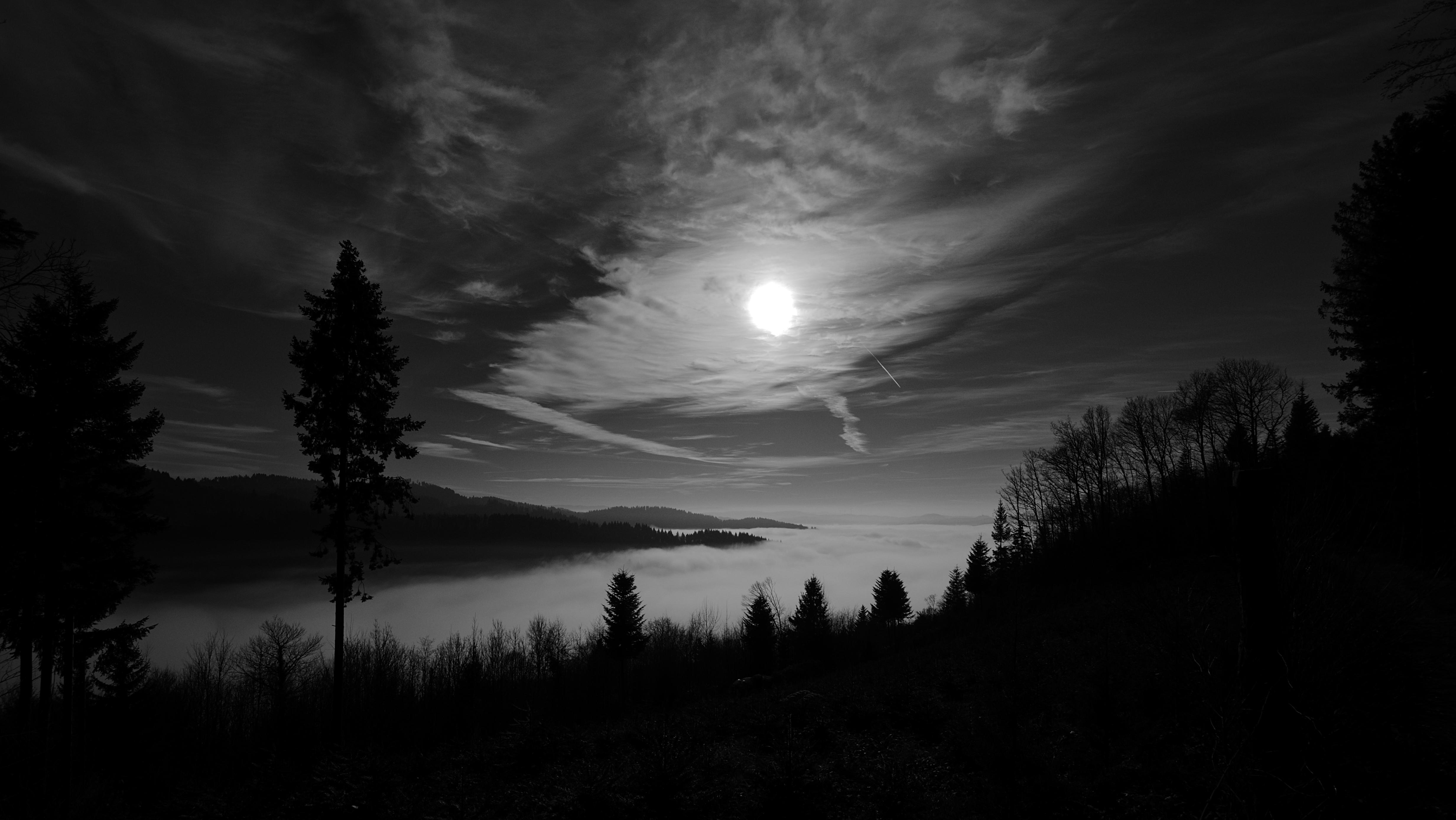96012 скачать обои Природа, Деревья, Небо, Луна, Лес, Чб - заставки и картинки бесплатно
