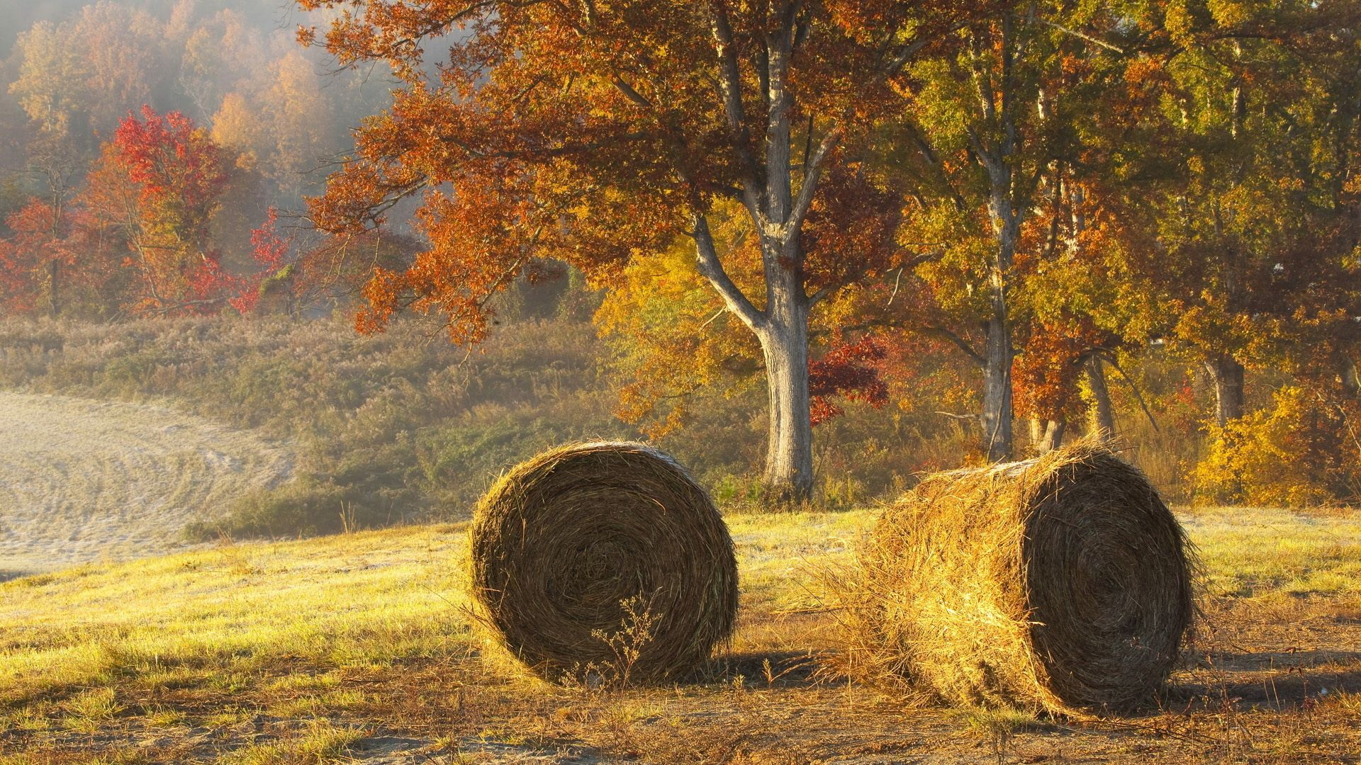 119619 Screensavers and Wallpapers Agriculture for phone. Download Nature, Autumn, Field, Hay, Agriculture, Bales pictures for free