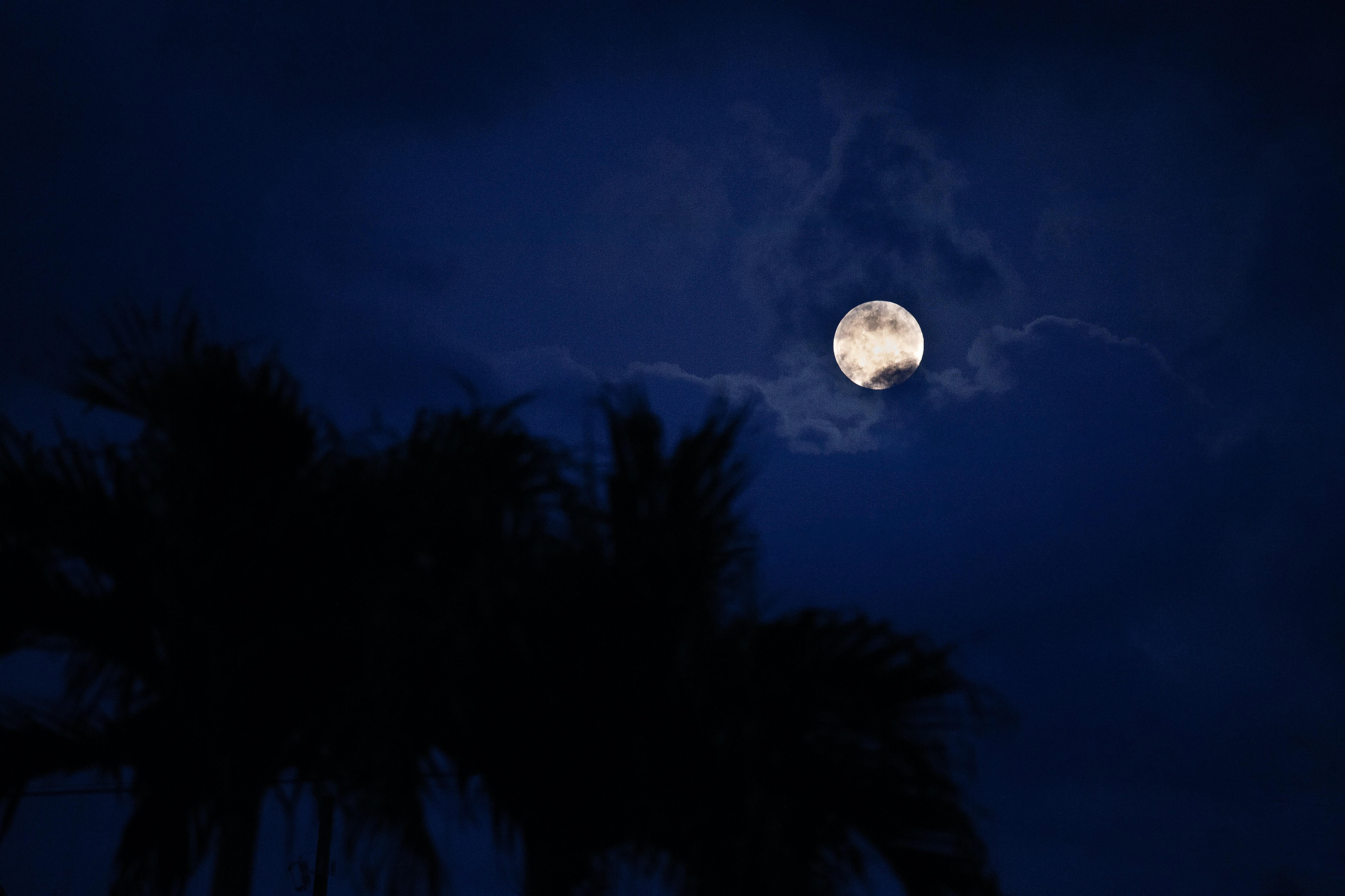130248 скачать обои Луна, Ночь, Темные, Пальма - заставки и картинки бесплатно