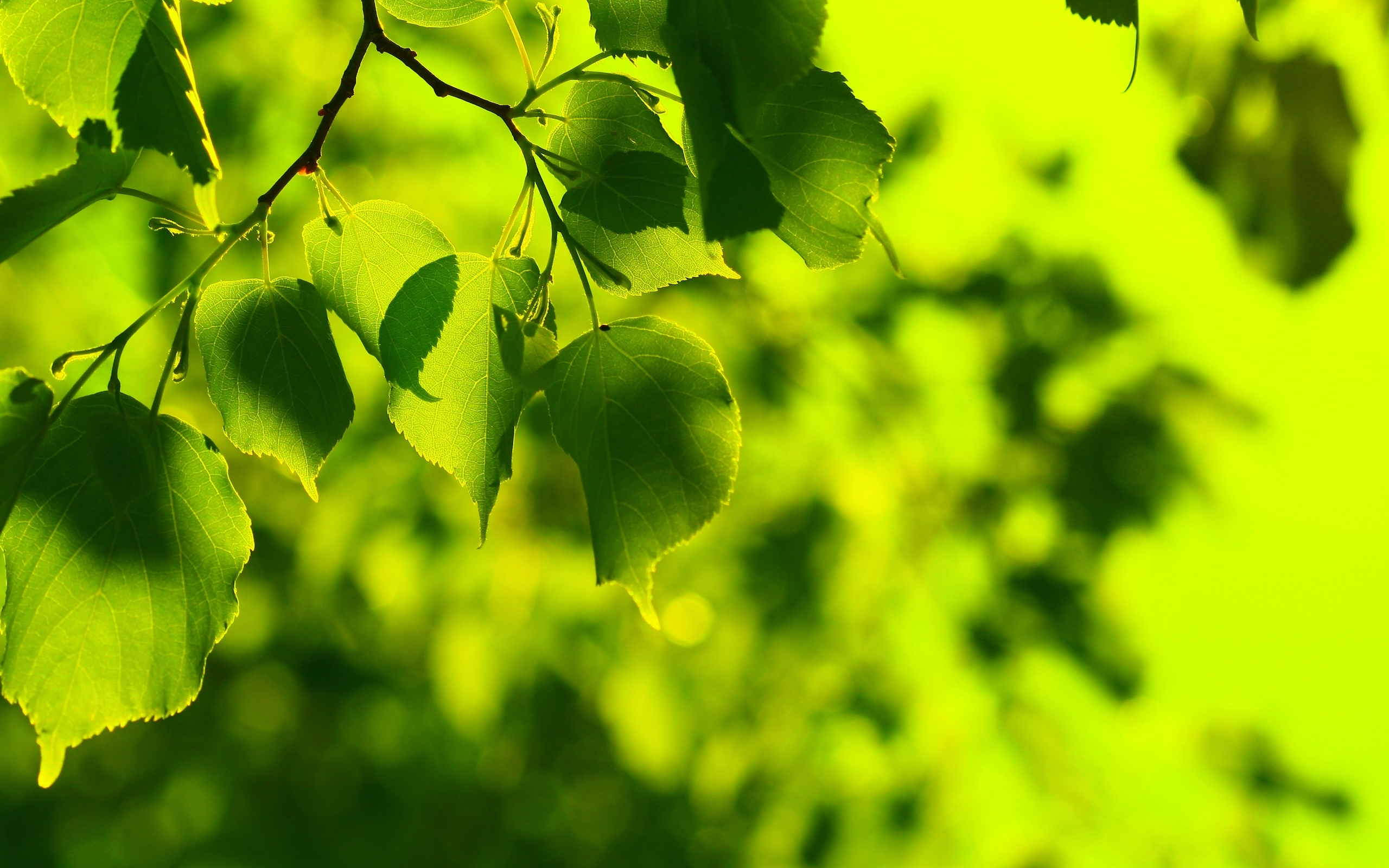 43771 download wallpaper Leaves, Objects screensavers and pictures for free