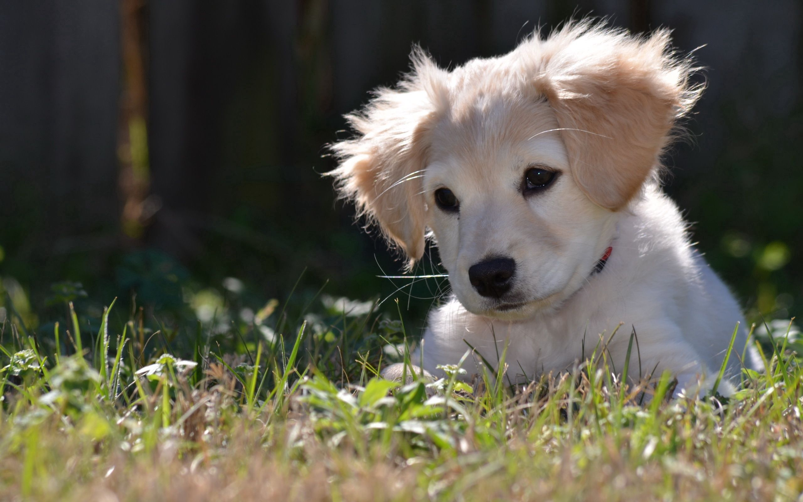 108304 Screensavers and Wallpapers Puppy for phone. Download Animals, Nature, Dog, Puppy pictures for free
