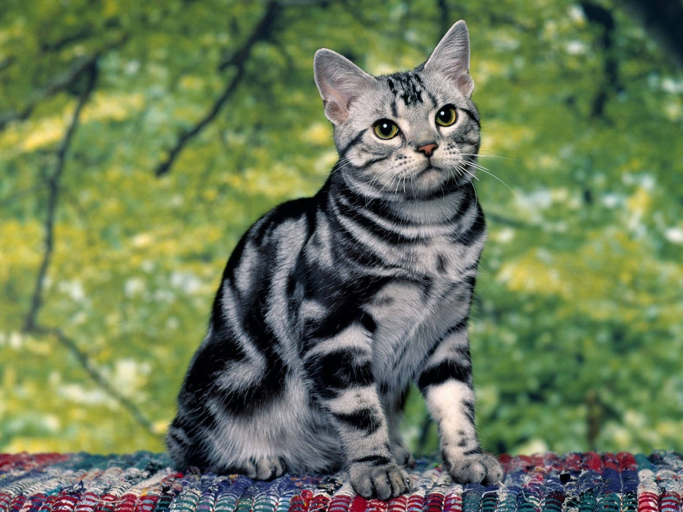 40967 download wallpaper Cats, Animals screensavers and pictures for free