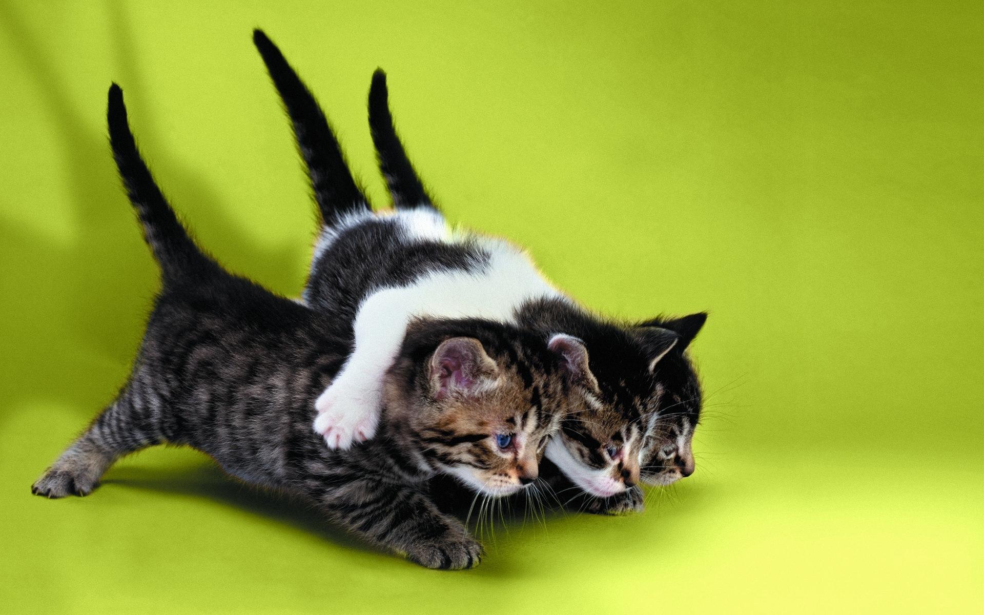 46692 Заставки и Обои Кошки (Коты, Котики) на телефон. Скачать Животные, Кошки (Коты, Котики) картинки бесплатно