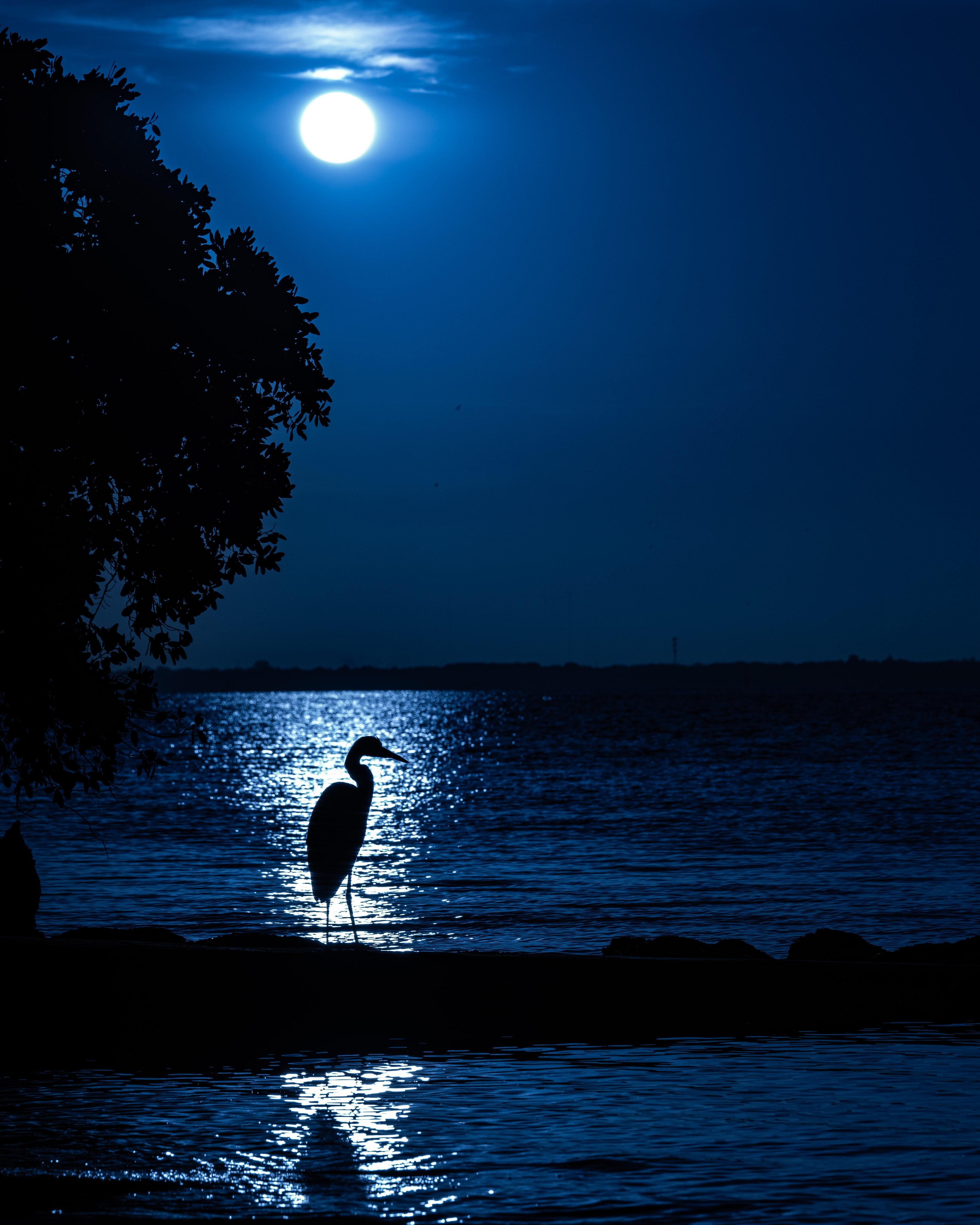 107110 скачать обои Луна, Темные, Ночь, Силуэт, Цапля - заставки и картинки бесплатно
