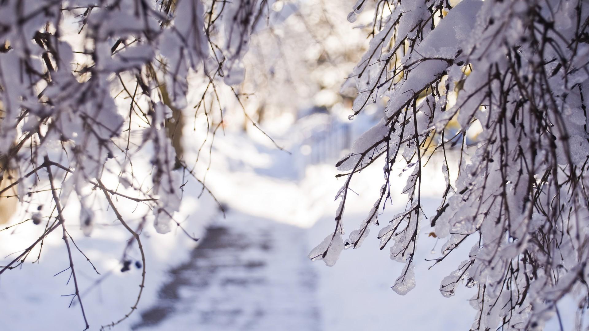 23220 descargar fondo de pantalla Paisaje, Invierno, Árboles, Nieve: protectores de pantalla e imágenes gratis