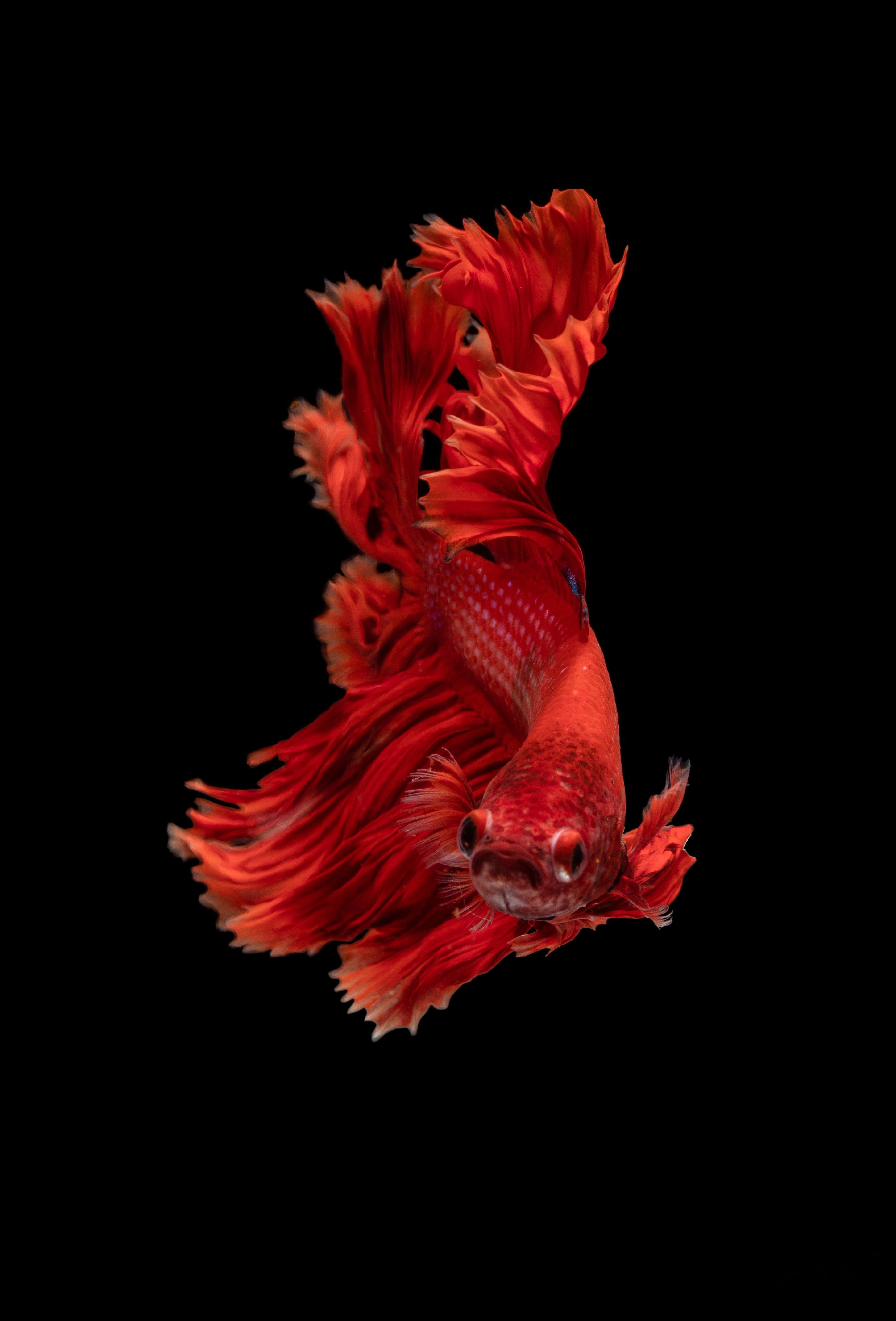 61777 Screensavers and Wallpapers Aquarium for phone. Download Animals, Underwater World, Aquarium, Small Fish, Fishy pictures for free