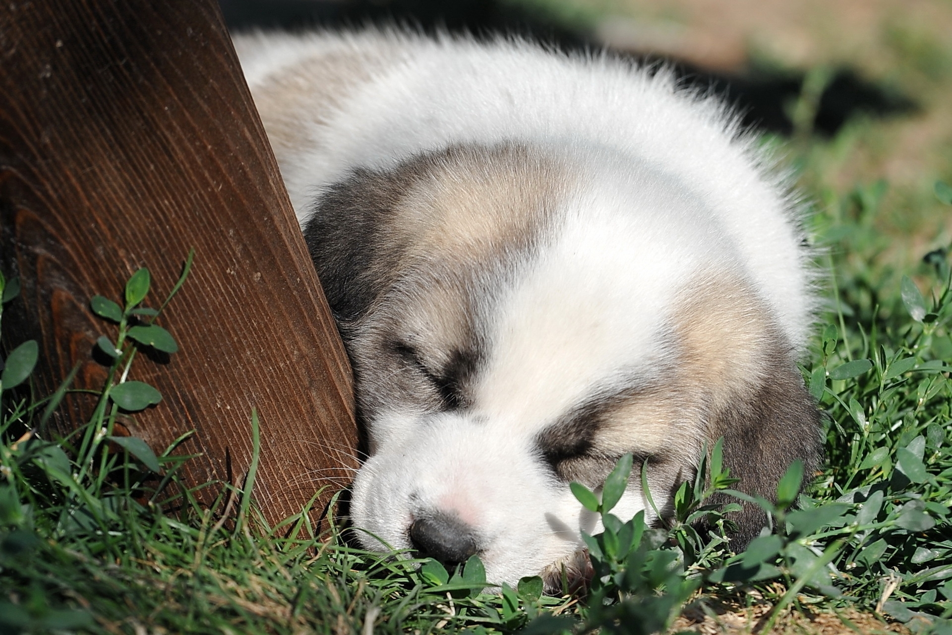 146221 download wallpaper Animals, Puppy, Grass, Muzzle, Sleep, Dream, Nice, Sweetheart screensavers and pictures for free