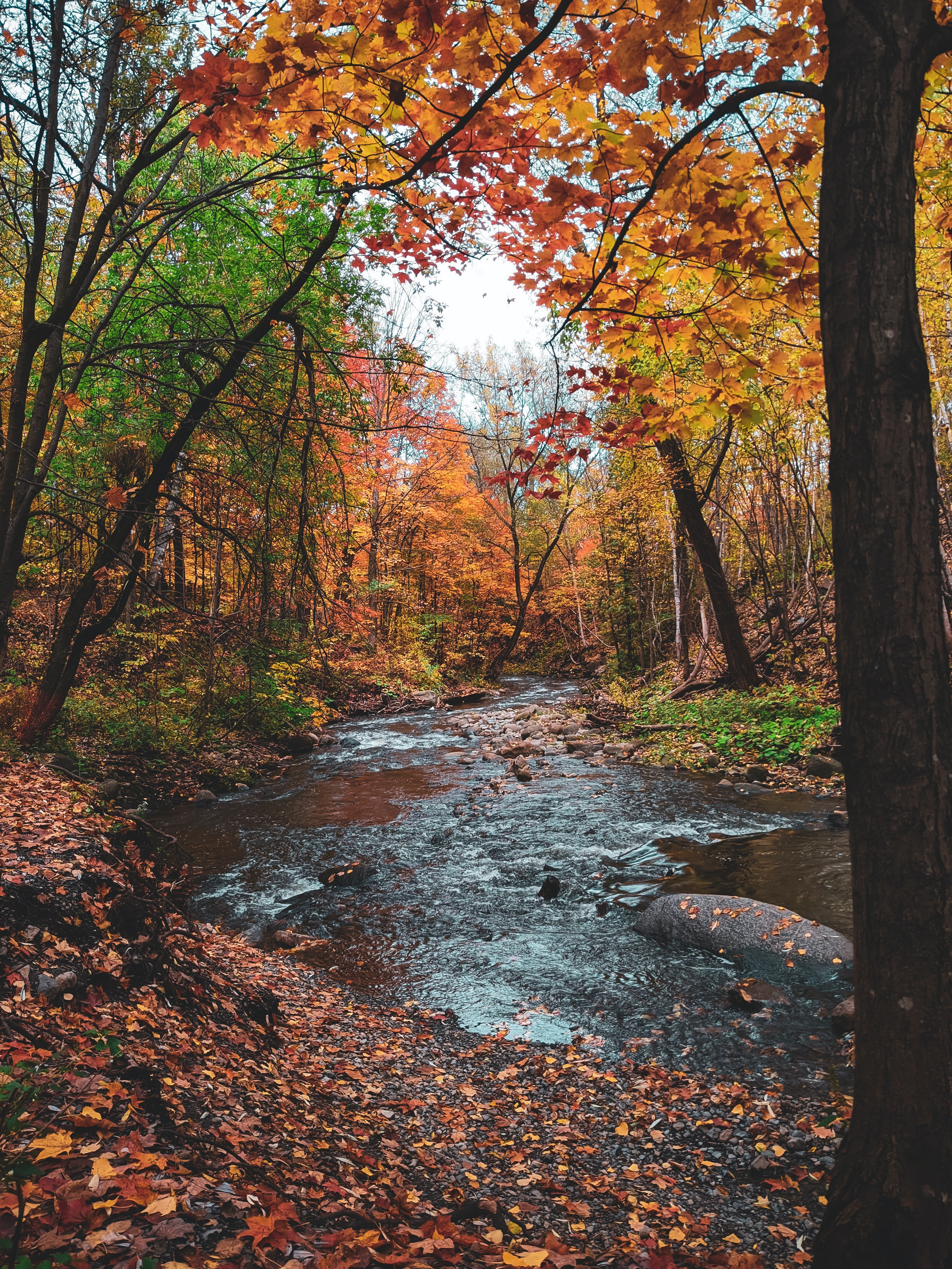 111720 download wallpaper Nature, Rivers, Autumn, Trees, Leaves screensavers and pictures for free