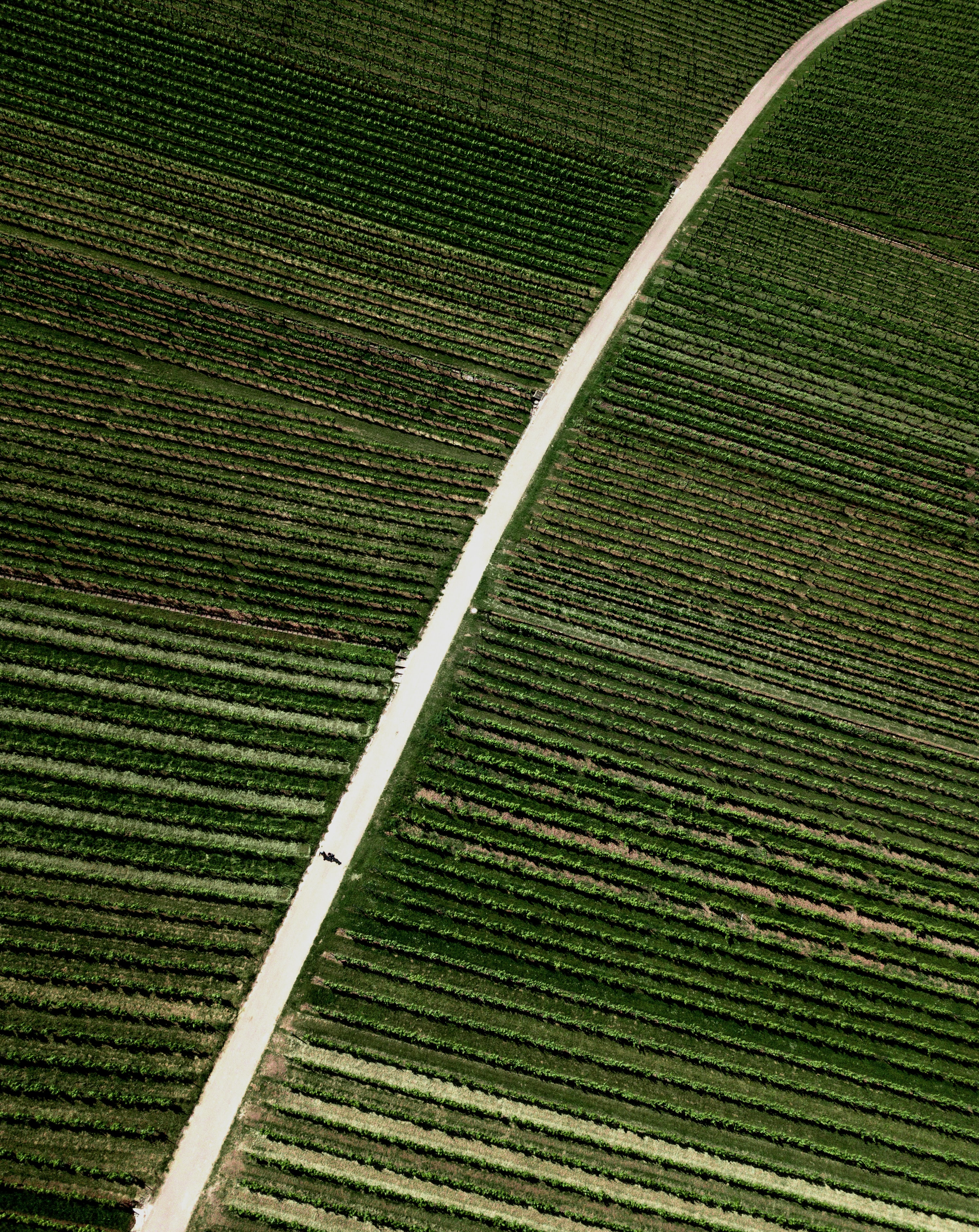 83987 Screensavers and Wallpapers Plantation for phone. Download Nature, Road, Field, Stripes, Streaks, Plantation pictures for free