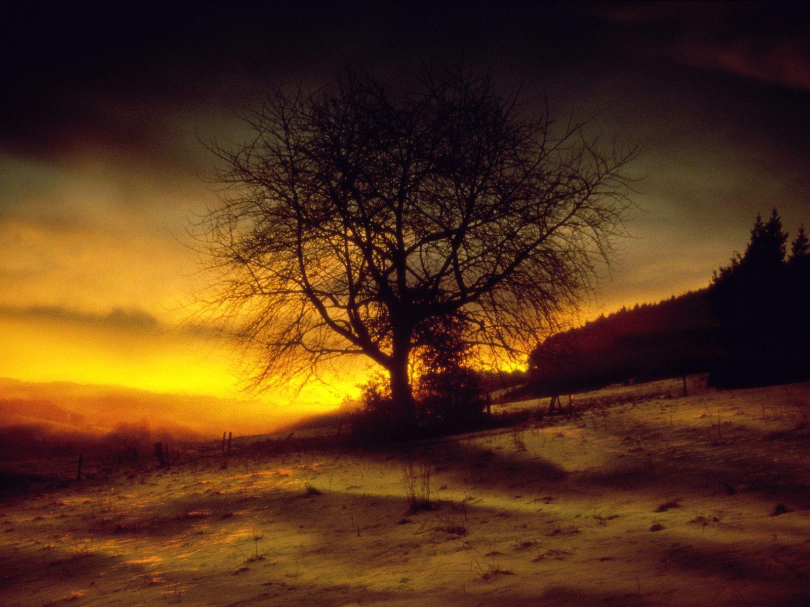 9857 скачать обои Пейзаж, Деревья, Закат - заставки и картинки бесплатно