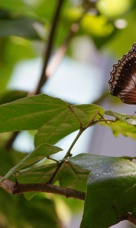 Скачать бесплатно картинку 80631: Макро, Бабочка, Насекомое, Листья, Ветки обои на телефон