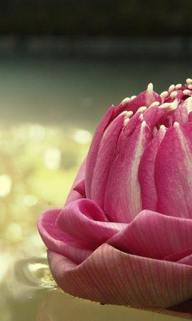 8757 скачать обои Растения, Цветы - заставки и картинки бесплатно