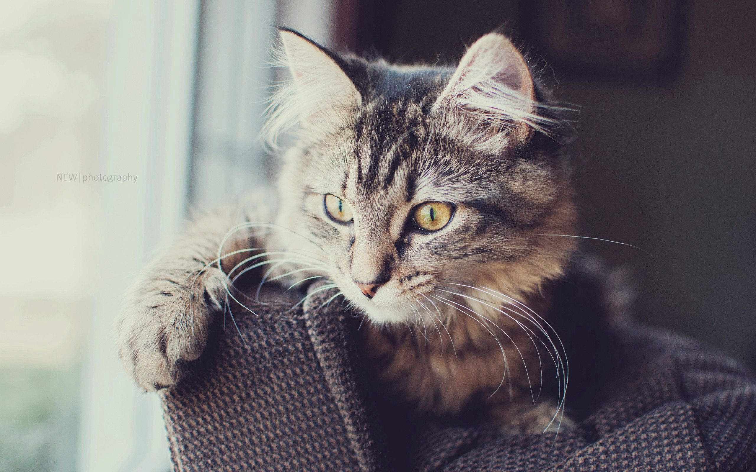 77125 Screensavers and Wallpapers Fluffy for phone. Download Animals, Cat, Fluffy, Muzzle, Sight, Opinion pictures for free