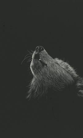 139252壁紙のダウンロード狼, 遠吠え, 吠える, アート, 画像, ドローイング, Bw, Chb-スクリーンセーバーと写真を無料で