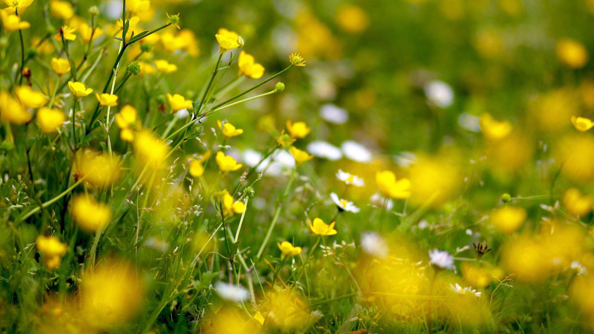 154125 fond d'écran 1080x2400 sur votre téléphone gratuitement, téléchargez des images Fleurs, Herbe, Macro, Floraison, Domaine, Champ 1080x2400 sur votre mobile
