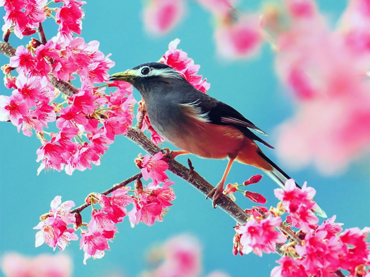 48575 Hintergrundbild herunterladen Pflanzen, Vögel - Bildschirmschoner und Bilder kostenlos