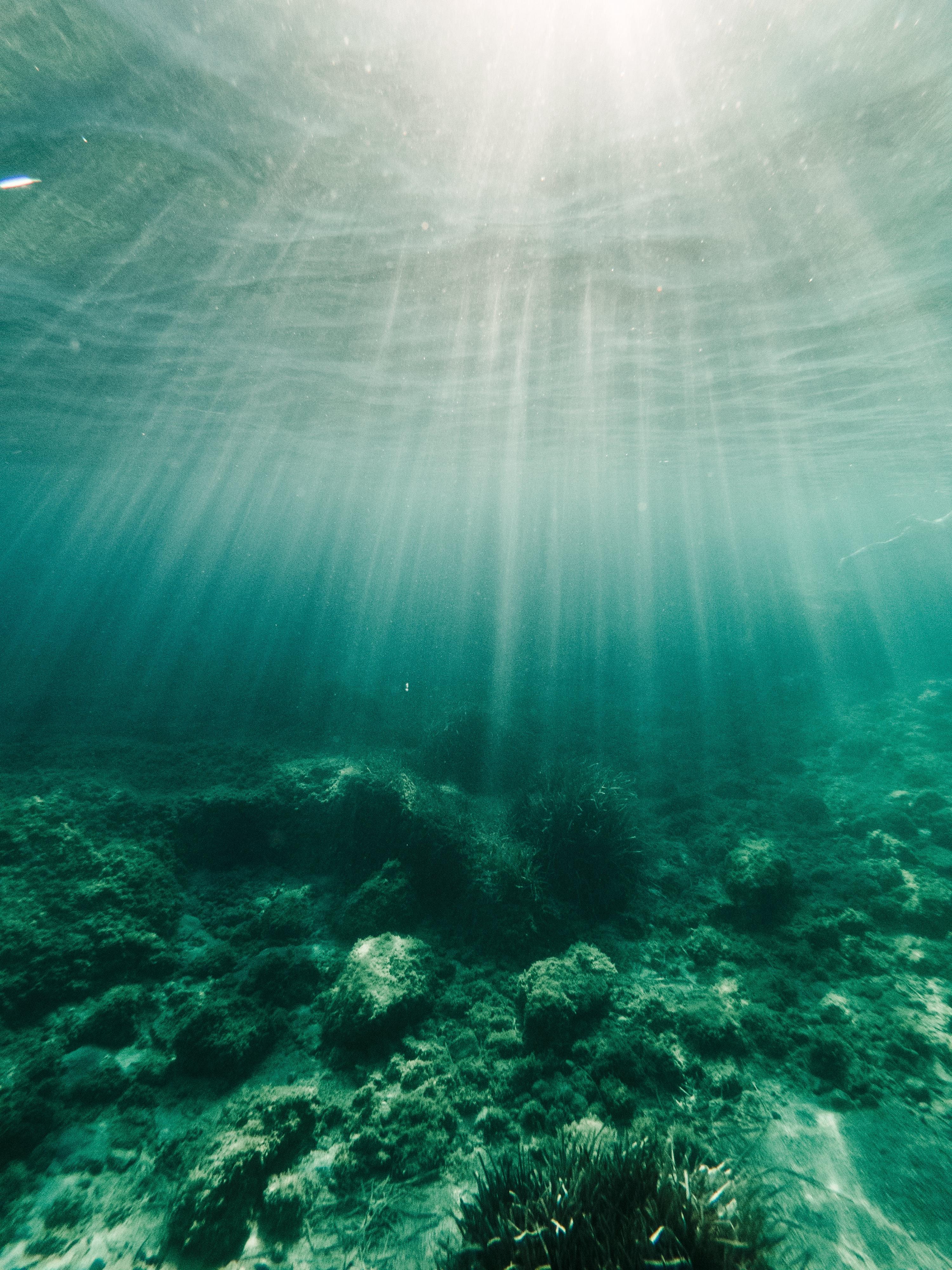 74054 baixar papel de parede Fundo, Natureza, Água, Feixes, Raios, Algas Marinhas, Alga, Inferior - protetores de tela e imagens gratuitamente