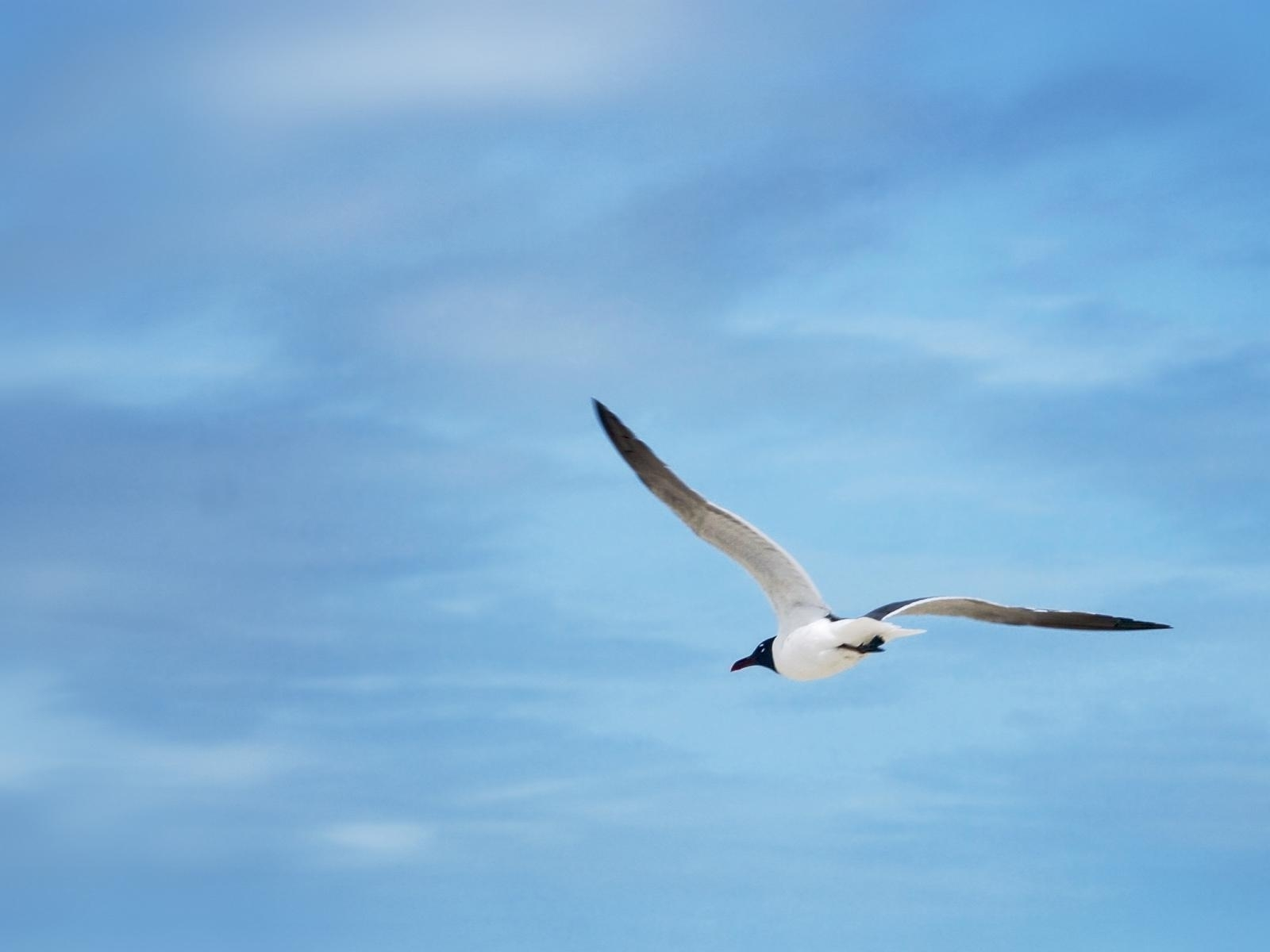 5835 download wallpaper Animals, Birds, Sky, Seagulls screensavers and pictures for free