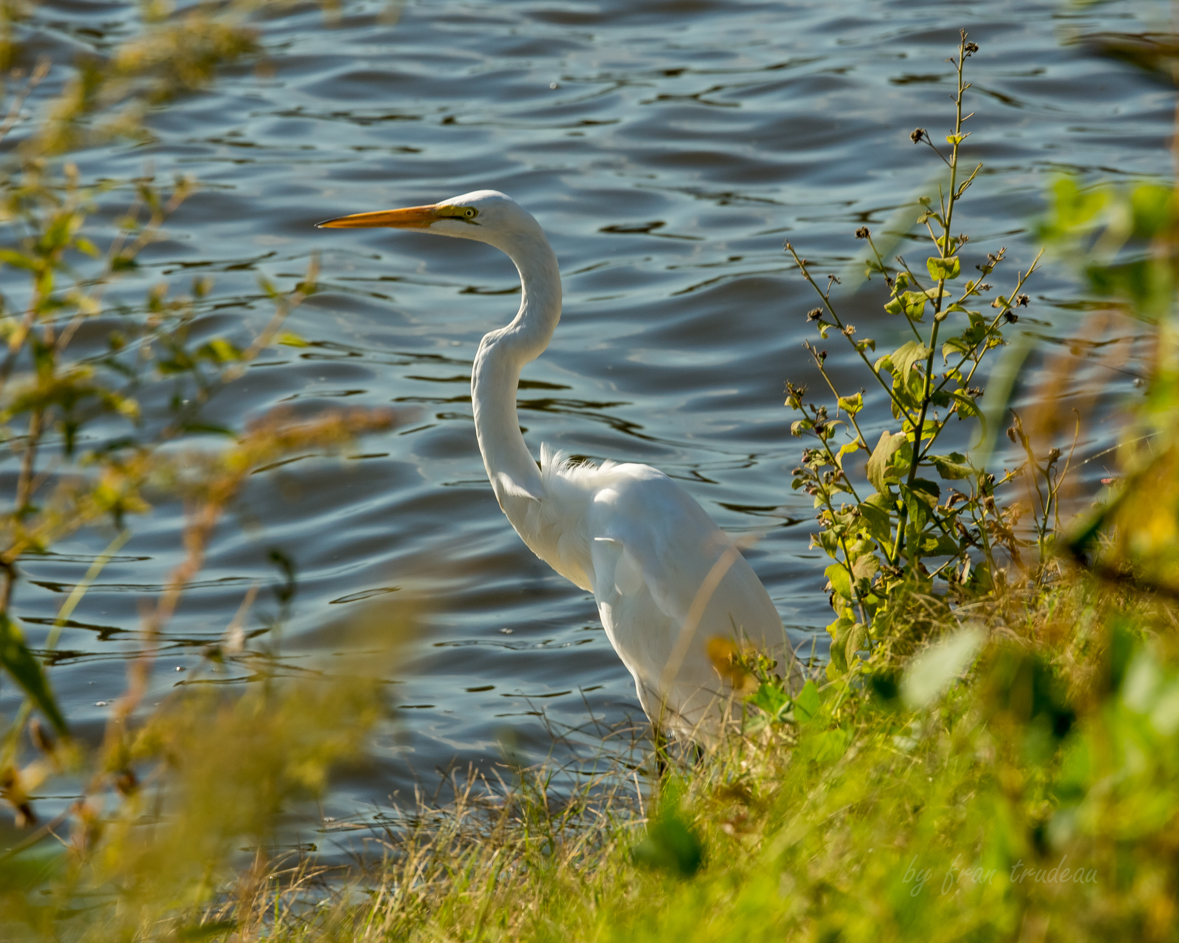 65307 download wallpaper Animals, Heron, Bird, Wildlife screensavers and pictures for free