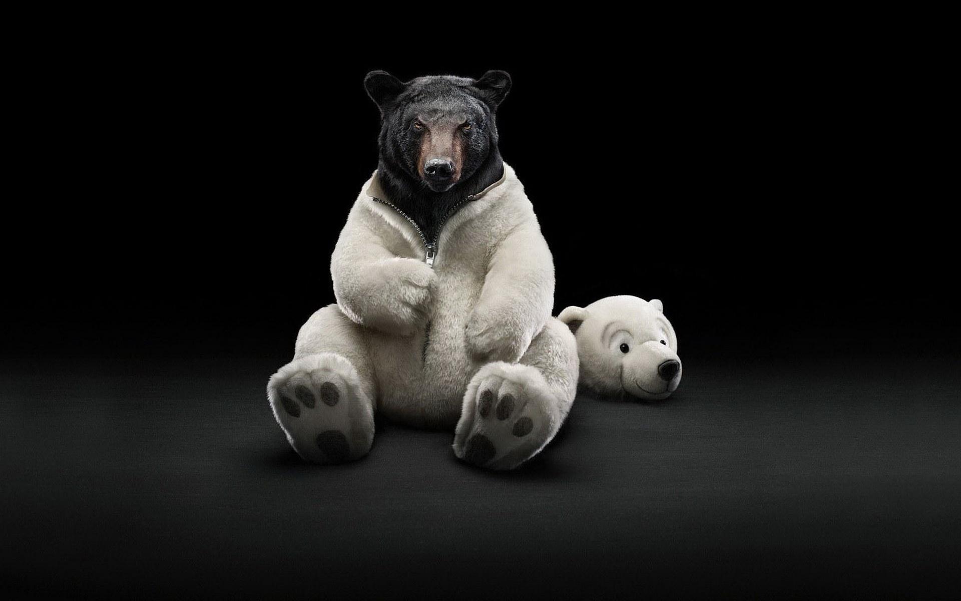 37212 скачать обои Юмор, Животные, Медведи - заставки и картинки бесплатно