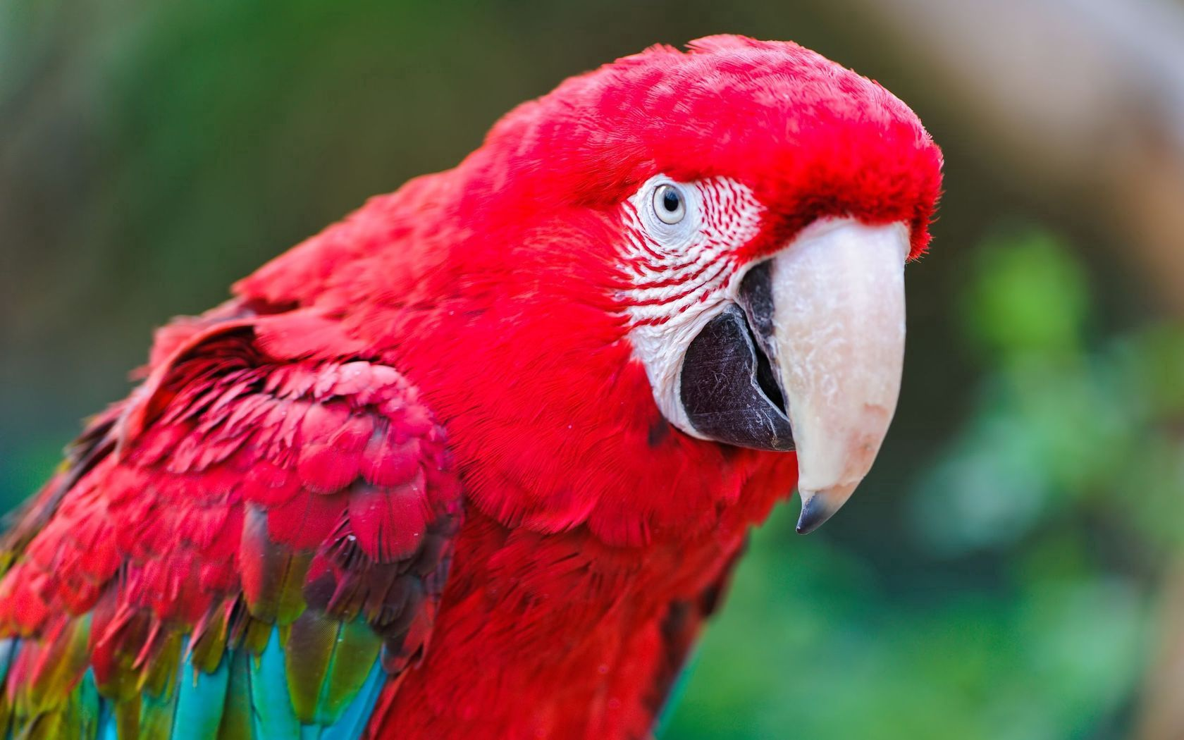 146304 download wallpaper Animals, Parrots, Macaw, Bird, Color, Feather screensavers and pictures for free