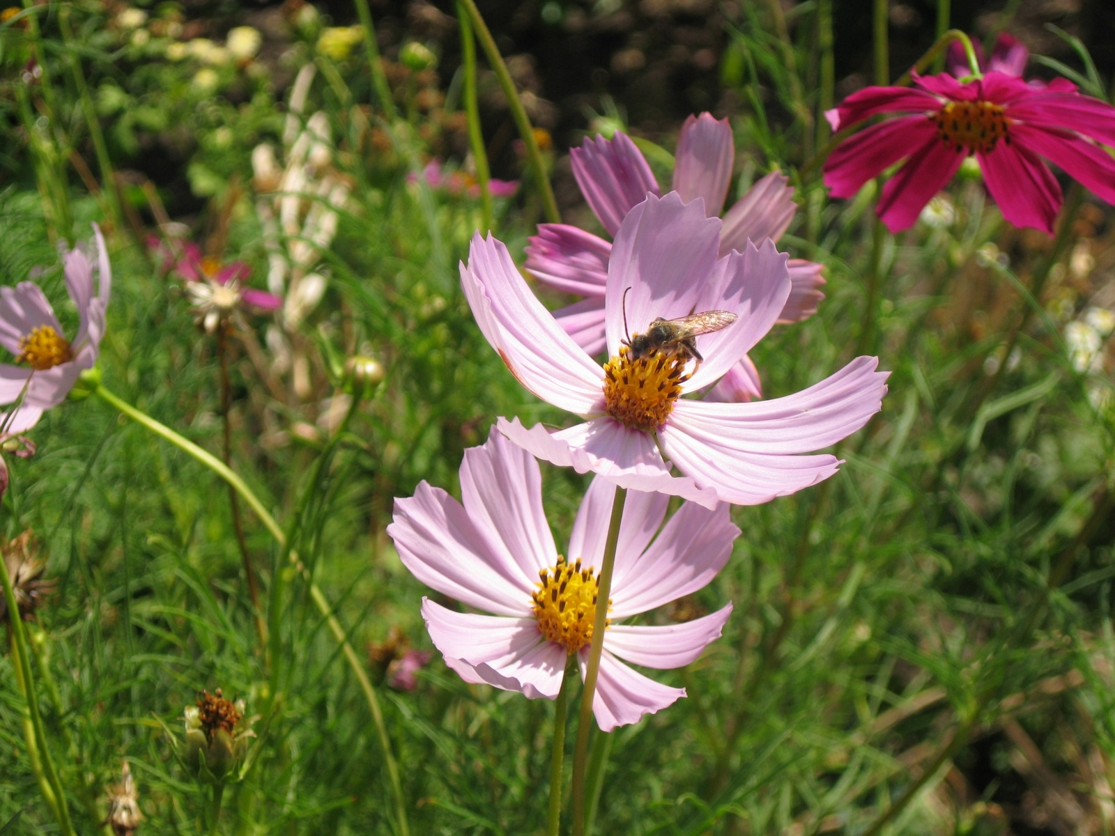 Handy-Wallpaper Pflanzen, Blumen kostenlos herunterladen.