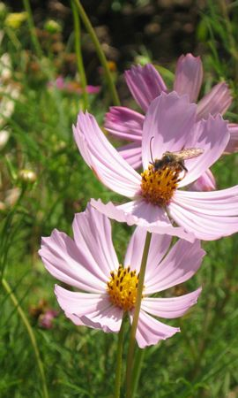 2656 скачать обои Растения, Цветы - заставки и картинки бесплатно