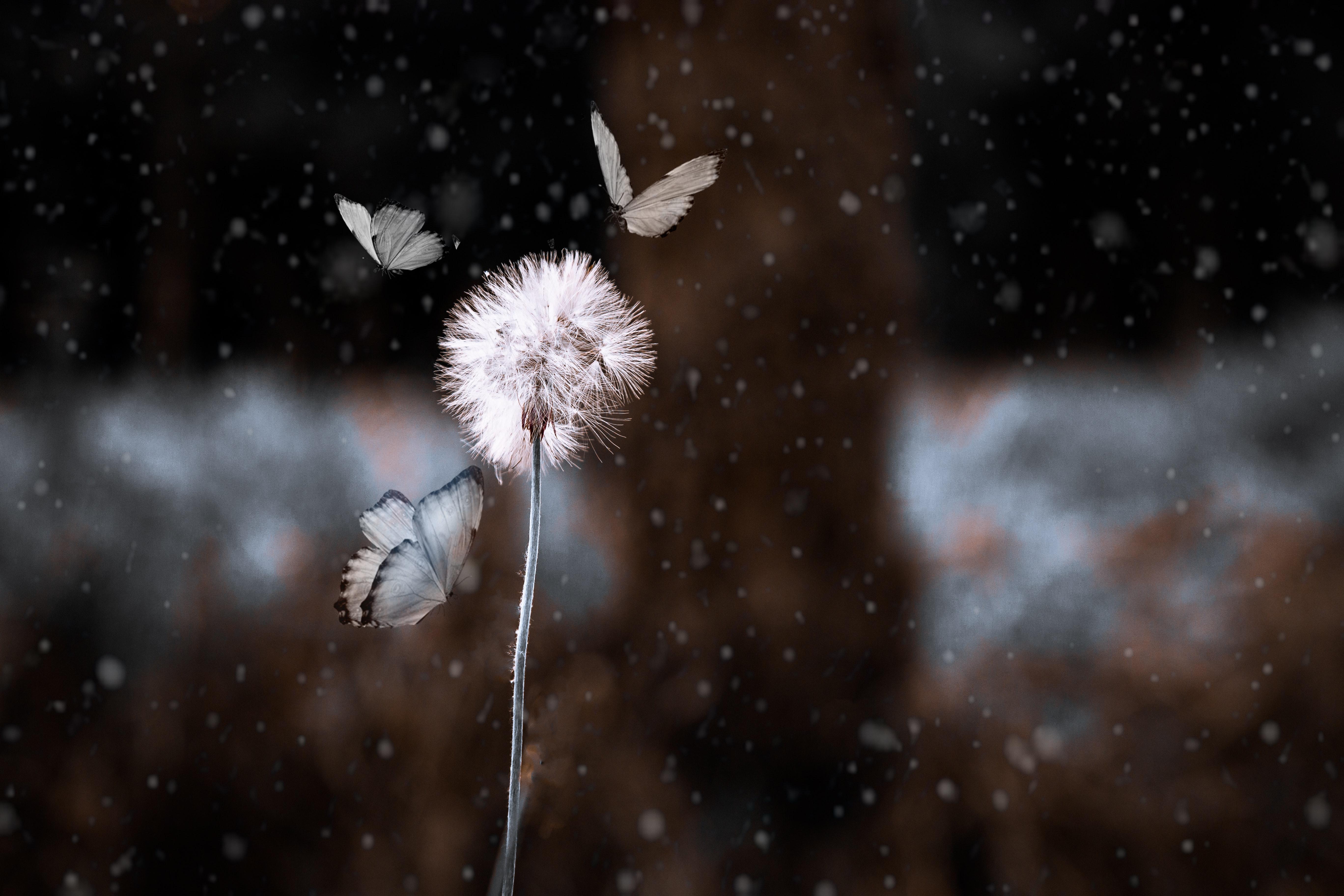 156612 скачать обои Бабочки, Цветок, Макро, Размытость, Насекомое, Фотошоп, Одуванчик - заставки и картинки бесплатно