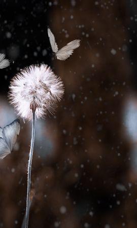 156612 descargar fondo de pantalla Macro, Diente De León, Mariposas, Photoshop, Borrosidad, Suave, Flor, Insecto: protectores de pantalla e imágenes gratis