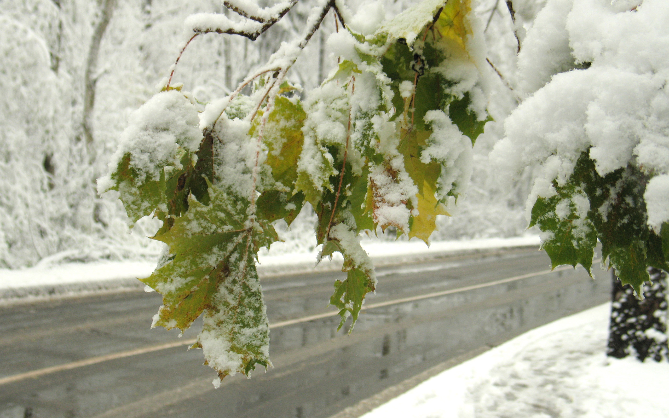 22060 скачать обои Пейзаж, Зима, Деревья, Дороги, Листья, Снег - заставки и картинки бесплатно