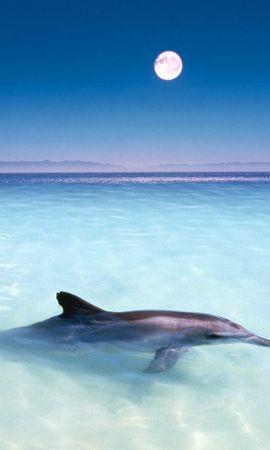 33449 baixar papel de parede Animais, Golfinhos - protetores de tela e imagens gratuitamente