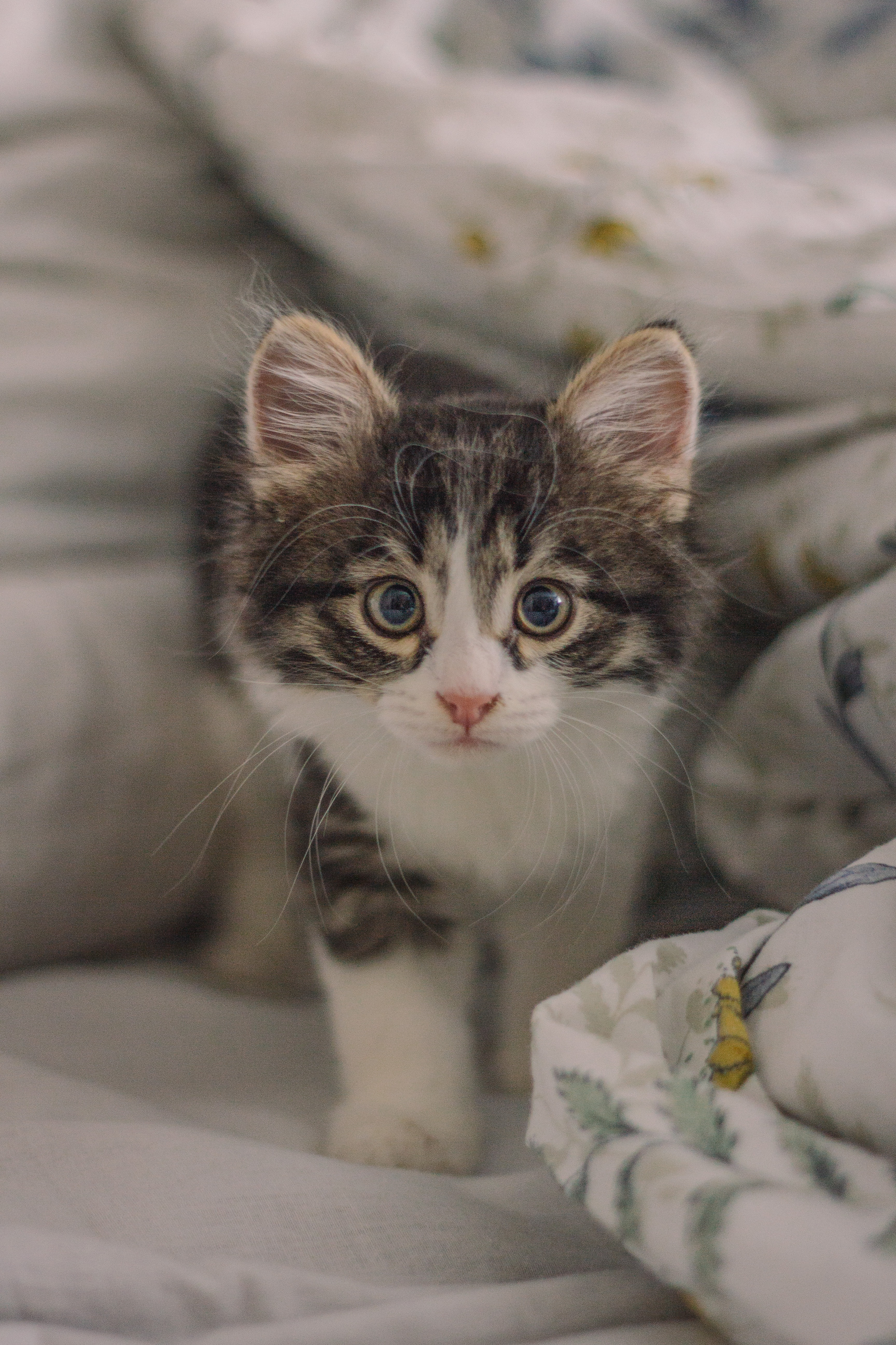 84536 Screensavers and Wallpapers Nice for phone. Download Animals, Cat, Kitty, Kitten, Pet, Sight, Opinion, Nice, Sweetheart pictures for free
