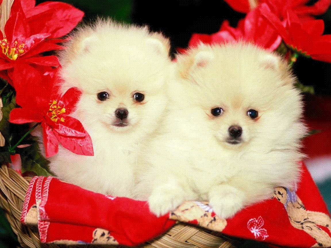 9238 download wallpaper Animals, Dogs screensavers and pictures for free
