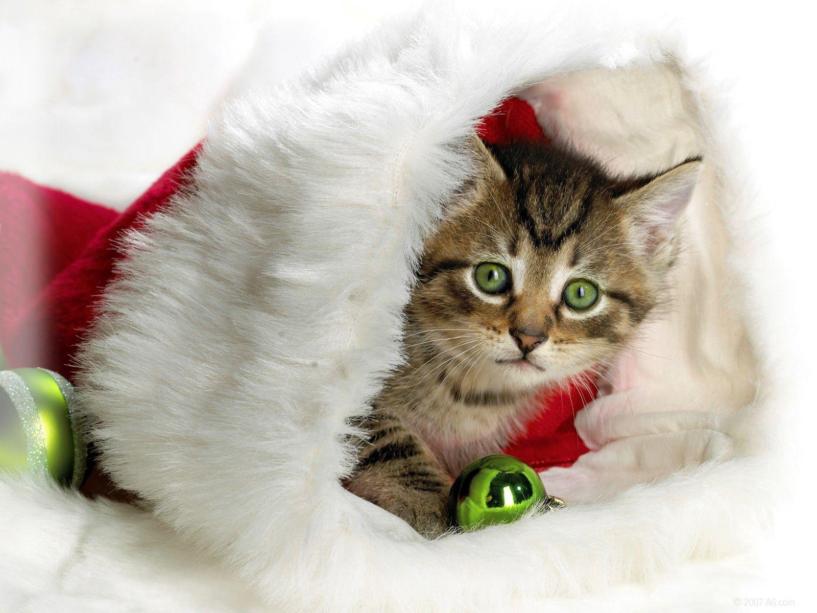 57479 économiseurs d'écran et fonds d'écran Fêtes sur votre téléphone. Téléchargez Fêtes, Noël, Minou, Chaton, Nouvel An, Chapeau, Attribut images gratuitement