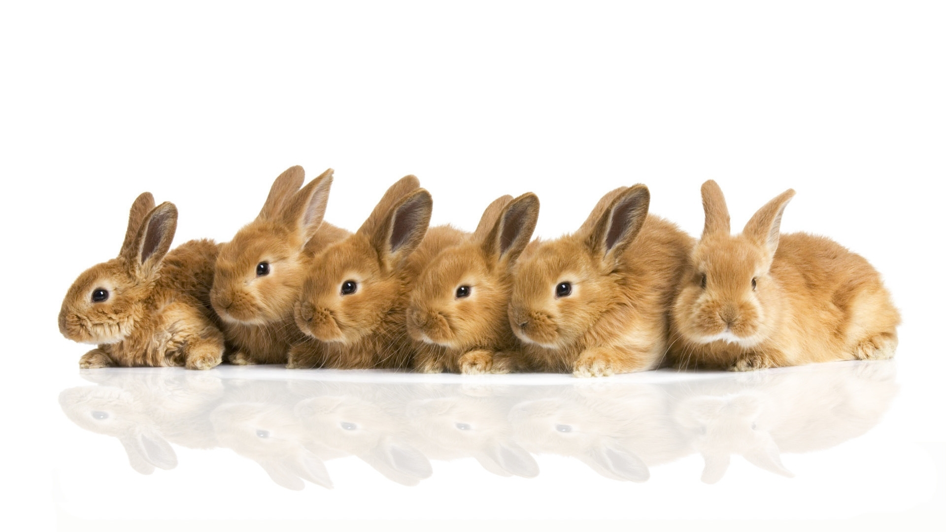 29358 download wallpaper Animals, Rabbits screensavers and pictures for free